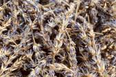 Lavendelähren 100g
