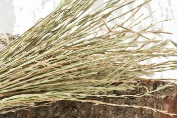 Weidelgras Bouquet 80g